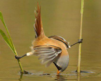 Smart bird